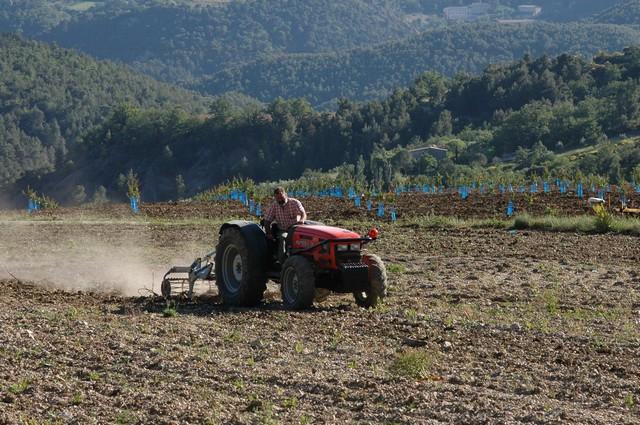Préparation des terres avant plantation du verger d'abricotiers