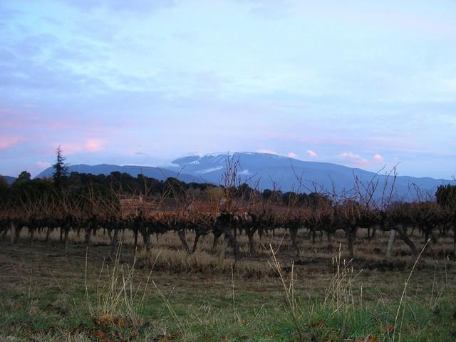 Automne sur la vigne et Ventoux enneigé